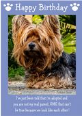 "Yorkshire Terrier-Happy Birthday - ""I'm Adopted"" Theme"